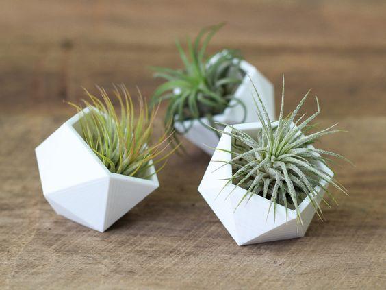 air plants 1